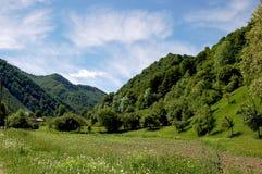Grüner Wald Lizenzfreie Stockbilder