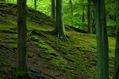 Grüner Wald lizenzfreies stockbild