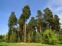 Grüner Wald auf Frühling lizenzfreie stockbilder