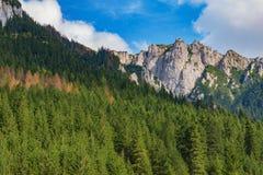 Grüner Wald in den Bergen stockbilder