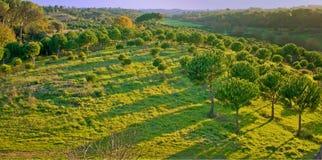 Grüner Wald an der Dämmerung Lizenzfreies Stockbild