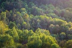 Grüner Wald im Frühjahr gesehen vom oben genannten, kurz vor Sonnenuntergang Stockfotos