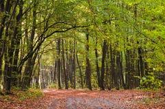 grüner Wald im Herbst stockbilder