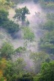 Grüner Wald im nebelhaften Morgen Lizenzfreie Stockfotos