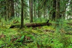 Grüner Wald im olympischen Nationalpark Lizenzfreie Stockbilder