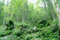 Grüner Wald mit Moos Stockfotos