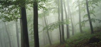 Grüner Wald mit Nebel Stockfoto