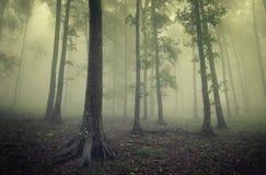 Grüner Wald mit Nebel zwischen Bäumen Lizenzfreies Stockbild