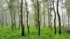 Grüner Wald am nebelhaften Morgen an Nationalpark PAs Hin Ngam Stockfotos