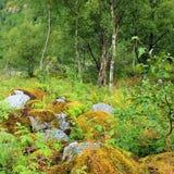Grüner Wald, Norwegen. Norwegische Landschaft Stockbilder