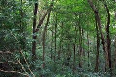 Grüner Wald, Phuket-Insel, Thailand Lizenzfreies Stockbild