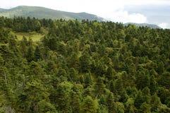 Grüner Wald in Shangrila Stockfotos