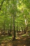 Grüner Wald am Sommer Lizenzfreie Stockbilder