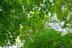 Grüner Wald am Sommertag Lizenzfreies Stockfoto