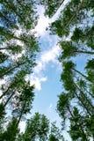 Grüner Wald und blauer Himmel stockfoto