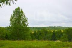Grüner Wald und einsames Holz lizenzfreies stockbild