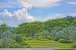 Grüner Wald und Felder Lizenzfreies Stockbild
