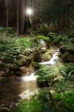 Grüner Wald und Fluss Stockbild
