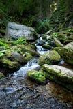 Grüner Wald und Fluss Lizenzfreie Stockbilder