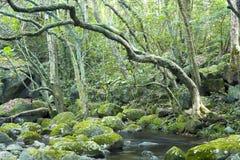 Grüner Wald und Fluss Lizenzfreies Stockfoto