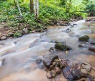 Grüner Wald und Fluss Stockfotografie