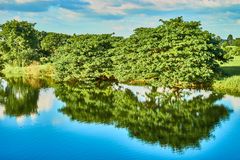 Grüner Wald und Fluss Lizenzfreie Stockfotografie