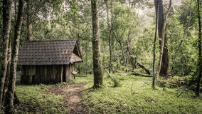 Grüner Wald und Hütten an einem nebelhaften Morgen, Malaysia. Stockbild