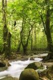 Grüner Wald und Strom Stockfotos