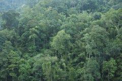 Grüner Waldhintergrund Stockbild