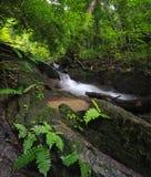 Grüner Waldhintergrund. Naturdschungelpark mit tropischen Bäumen Lizenzfreie Stockfotos