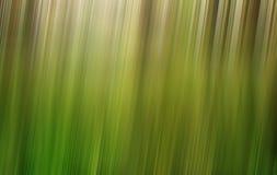 Grüner Waldunschärfehintergrund Lizenzfreie Stockbilder