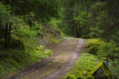 Grüner Waldweg bedeckt im Moos stockfoto