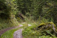 Grüner Waldweg bedeckt im Moos lizenzfreies stockbild