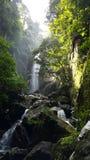 Grüner Wasserfall Stockbilder