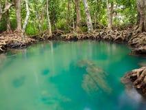 Grüner Wassersee-Flusswasserfall mit Wurzelbaum bei Tha Pom Klong Song Nam, Krabi, Thailand Stockfotos