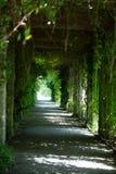 Grüner Weg im Sommer im botanischen Garten Stockbilder