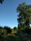 Grüner Weg in Somerset Lizenzfreie Stockbilder