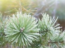 Grüner Weihnachtsbaum Lizenzfreie Stockfotografie