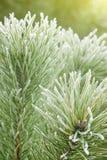 Grüner Weihnachtsbaum Lizenzfreie Stockbilder