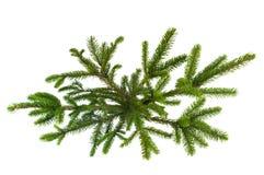 Grüner Weihnachtsbaum lokalisiert auf Weiß Stockbilder