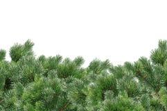 Grüner Weihnachtsbaum lokalisiert auf Weiß Lizenzfreie Stockbilder