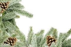 Grüner Weihnachtsbaum mit den Kegeln lokalisiert auf Weiß Lizenzfreie Stockfotografie