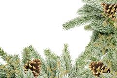 Grüner Weihnachtsbaum mit den Kegeln lokalisiert auf Weiß Stockbilder