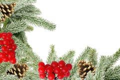 Grüner Weihnachtsbaum mit Kegeln und Eberesche lokalisiert auf Weiß Stockfoto