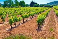 Grüner Weinberg im Süden von Frankreich Lizenzfreies Stockbild