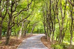 Grüner Weisen- und Baumhintergrund von Central Park Stockbilder