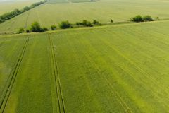 Grüner Weizen auf dem Gebiet, Draufsicht mit einem Brummen Beschaffenheit von whea lizenzfreie stockfotografie