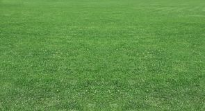 Grüner Weizen auf einem Kornfeldgras Lizenzfreie Stockfotografie