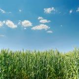 Grüner Weizen und blauer Himmel Lizenzfreie Stockfotografie