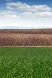 Grüner Weizen und gepflogene Weidelandschaft Lizenzfreies Stockfoto